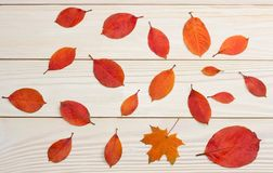autumn background with colored leaves on wooden board. top view with copy space stock image