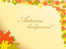 Autumn background with colored maple leaves decorates the top right corner Royalty Free Stock Photo