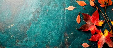 Autumn background with colored red leaves on blue slate background. Top view, copy space.  royalty free stock image