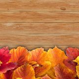 Autumn background with colored viburnum leaves Royalty Free Stock Photos