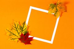 Autumn background. Colorful autumn fall leaves and white frame on orange color background Royalty Free Stock Photos