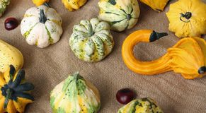 Autumn background with colorful decorative pumpkins on jute bag Royalty Free Stock Photography
