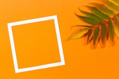 Autumn background. Colorful autumn fall leaves and white frame on orange color background Stock Photos