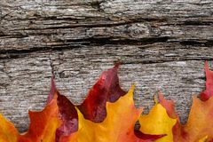 Fall maple leaves on wooden table Royalty Free Stock Photos