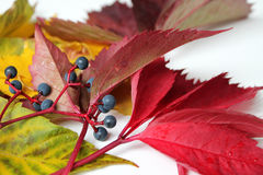 Autumn background. Colorful background of fallen autumn leaves Royalty Free Stock Photos