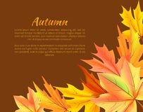 Autumn Background with Colorful Foliage in Corner Royalty Free Stock Photos