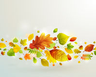 Autumn background with colorful leaves. Royalty Free Stock Images