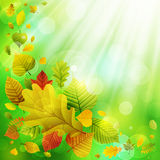 Autumn background with colorful leaves Stock Photos