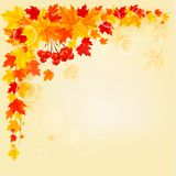 Autumn background with colorful leaves Royalty Free Stock Photography