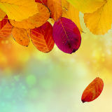Autumn background with colorful leaves, copy space Royalty Free Stock Image