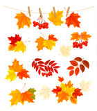 Autumn background with colorful leaves. Design ele Royalty Free Stock Photos