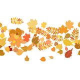 Autumn background with colorful leaves. Royalty Free Stock Photography