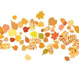 Autumn background with colorful leaves. Stock Image