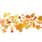 Autumn background with colorful leaves. Stock Photography