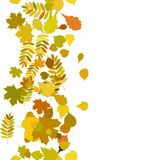 Autumn background with colorful leaves. Royalty Free Stock Photo