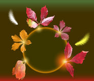 Autumn background with colorful leaves and flying  Stock Image