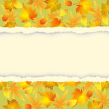 Autumn background with colorful leaves pattern Stock Image