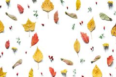 Autumn Background With Colorful Leaves Royalty Free Stock Images