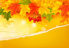 Autumn background with colorful leaves and ripped  Royalty Free Stock Images