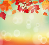 Autumn background with colorful leaves and rowan. Royalty Free Stock Photos