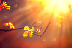 Autumn background with colorful leaves Royalty Free Stock Image