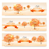 Autumn background with colorful leaves and trees. Stock Photo