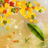 Autumn background,colorful leaves and umbrella . Stock Photography