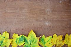 Autumn background. Colorful autumn leaves on wooden background Royalty Free Stock Images