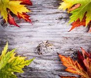 Autumn background with colorful maple leaves on wooden board Royalty Free Stock Photography