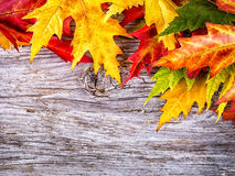 Autumn background with colorful maple leaves on wooden board Royalty Free Stock Images