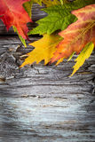 Autumn background with colorful maple leaves on wooden board Stock Photo