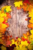 Autumn background, colorful tree leaves. Stock Images