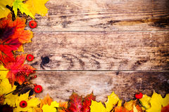 Autumn background, colorful tree leaves. Royalty Free Stock Photo