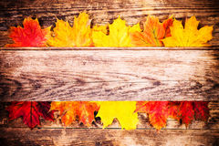 Autumn background, colorful tree leaves. Royalty Free Stock Image