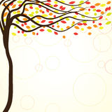 Autumn background with colorful trees Stock Images