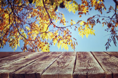 Autumn background with colorfull foilage background and rustic wood boards in front. Royalty Free Stock Image