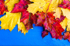 Autumn background colour leaves blue boards Stock Photos