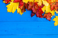 Autumn background colour leaves blue boards Stock Photo