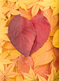 Autumn background from colourful leaves Stock Photos