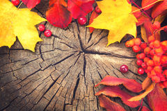 Autumn background with colourful leaves Stock Images