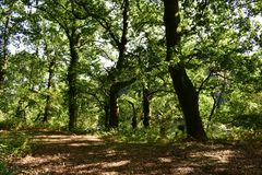 Autumn forest colours. Path, oaks and foliage. Tree trunks, branches and green leaves. Sun light with shadows. Galicia, Spain. stock photos