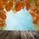 Autumn Background com céu azul, queda Linden Leaves imagem de stock