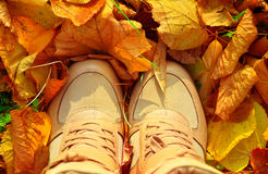 Autumn Background con las hojas de la caída y los zapatos de la mujer Imágenes de archivo libres de regalías