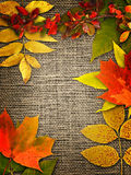 Autumn Background. Stock Images