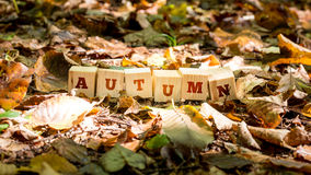 Autumn background and concept. With the word - Autumn - on a row of wooden blocks amongst fallen autumn leaves, some colorful, some decayed and withered showing stock images
