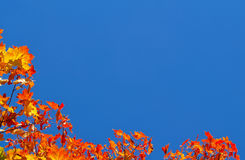 Autumn background with copy space. Royalty Free Stock Photos