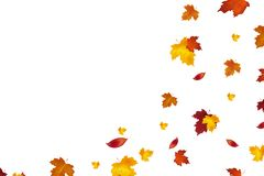 Autumn background design. Autumn falling red, yellow, orange and brown leaves isolated on white background. Vector autumnal foliag. E fall of maple leaves Stock Photos