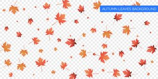 Autumn background design. Autumn falling leaves on transparent background. Vector autumnal foliage fall of maple leaves. Autumn background design. Autumn royalty free illustration
