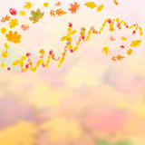 Autumn background for design II. Autumn background with bright leaves for design, school season; selective focus Royalty Free Stock Photography