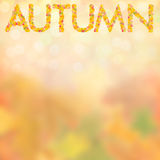 Autumn background for design III. Autumn background with bright leaves for design, school season; selective focus Royalty Free Stock Photo